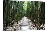 Jenna Szerlag Premium Thick-Wrap Canvas Wall Art Print entitled Hawaii, Maui, Kipahulu, Haleakala National Park, Trail through bamboo forest 48''x32''