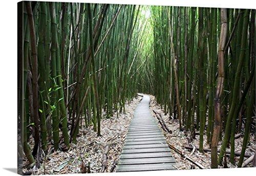 Jenna Szerlag Premium Thick-Wrap Canvas Wall Art Print entitled Hawaii, Maui, Kipahulu, Haleakala National Park, Trail through bamboo forest 48''x32'' by Canvas on Demand