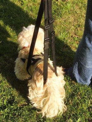 tiffys Andador para pequeños perros la Soporte Perfecto al Correr ...