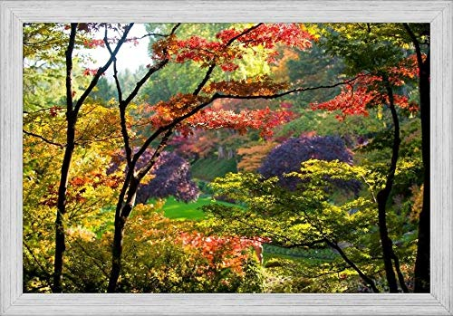 (Easy Art Prints Panoramic Images's 'Trees in a Garden, Butchart Gardens, Victoria, Vancouver Island, British Columbia, Canada' Premium Framed Canvas Art - 30