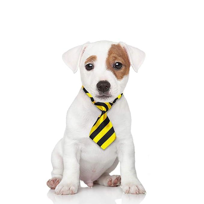 Zara WebsterZar - Corbata para Mascotas, diseño de Perro y Gato ...
