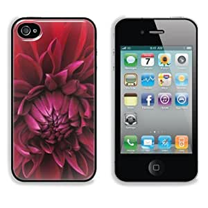 Drawing of Pink Chrysanthemum Apple iPhone 4 / 4S Snap Cover Case Premium Aluminium Customized Made to Order Support Ready 4 7/16 inch (112mm) x 2 3/8 inch (60mm) x 7/16 inch (11mm) Liil iPhone_4 4S Professional Cases Touch Accessories Graphic Covers Designed Model Folio Sleeve HD Template Wallpaper Photo Jacket Wifi 16gb 32gb 64gb Luxury Protector Wireless Cellphone Cell Phone