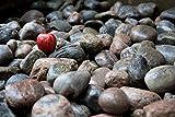 "Large 3"" Granite River Rock 5lb - Decorative"