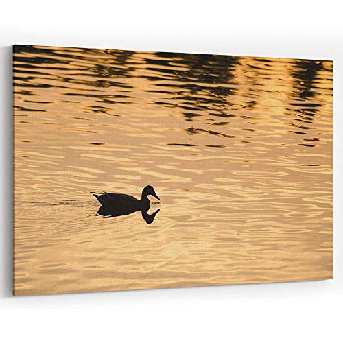 (Silhouette of Duck Swimming in Golden Pond as Sun Sets Canvas Prints Wall Art,Modern Home Decor )