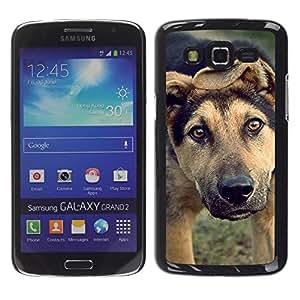 Be Good Phone Accessory // Dura Cáscara cubierta Protectora Caso Carcasa Funda de Protección para Samsung Galaxy Grand 2 SM-G7102 SM-G7105 // Mutt Wolfhound Shorthair Mongrel Dog
