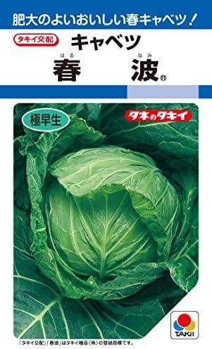 タキイ種苗 キャベツ 春波 ACA066