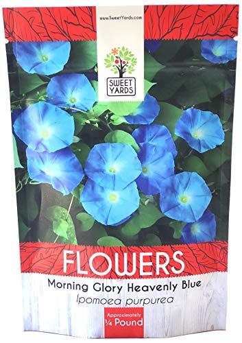 Morning Glory Seeds Heavenly Blue - Bulk 1/4 Pound Bag - Over 4,000 Fresh Flower ()