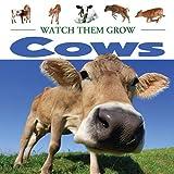 Cows, Lauren Diemer, 1605969192