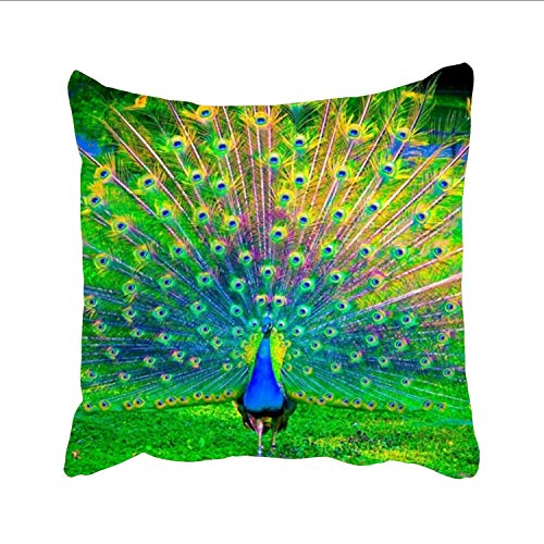 PeacockWallpaper Sofa Simple Home Decor Pillow £¬Cotton Linen Decorative Square Throw Pillow Covers -