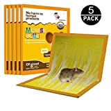 JCHOPE Mouse Glue Boards, Mouse Glue Traps, Mouse Trap, Mouse Size Glue Traps Sticky Boards, Professional Strength Glue (5 Pack) (Yellow.)