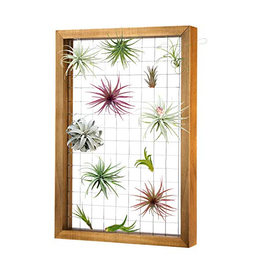 Magicfly Air Plants Frame Hanging Holder, 16 X 11 Inch Wooden Airplant Display Holder Succulent Tillandsia for House Plants, Hanger Wooden Shelf for Home Décor