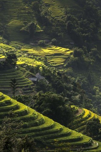 Just Stunning Green Terraced Rice Fields on Hills in Vietnam Journal: Take Notes, Write Down Memories in this 150 Page Lined Journal - Terraced Rice