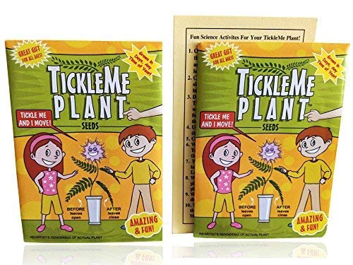 (TickleMe Plant Seeds Packets (2) for Party Bag or Christmas Stocking Stuffer! Leave Fold Together When You Tickle It. Great Science Fun, Green and Educational. Easy to Grow Indoors. It Can Flower.)