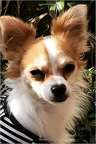 So Cute Long Haired Chihuahua Puppy Lapdog Journal 150 Page
