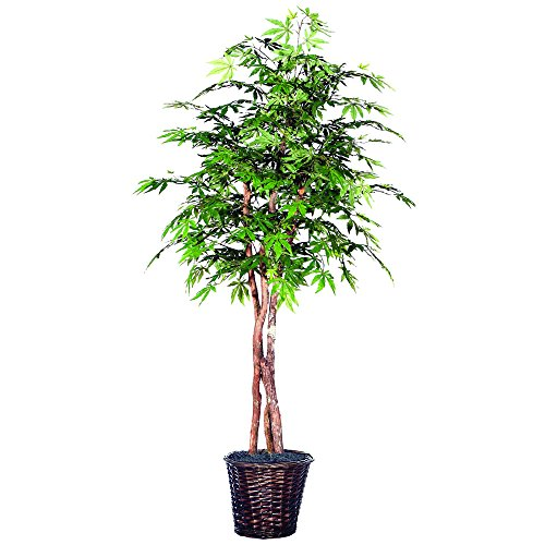 Vickerman THE1860 Japanese Maple Heartland Tree, 6' (Maple Tree Artificial Japanese)