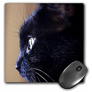3dRose LLC 8 x 8 x 0.25 Inches Extreme Close-Up of Black Cat Pattern Mouse Pad (mp_49295_1)