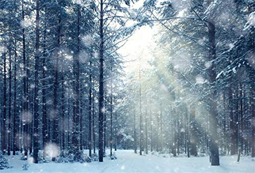 CSFOTO 10x7ft Background for Winter Birch Forest Sunray Woods Photography Backdrop Bokeh Halos Snowing Sunshine Grove Winter Forest Natual Scenery Vacation Tour Photo Studio Props Vinyl Wallpaper