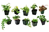 Classroom Terrarium Plant Bundle (10 plants) Review