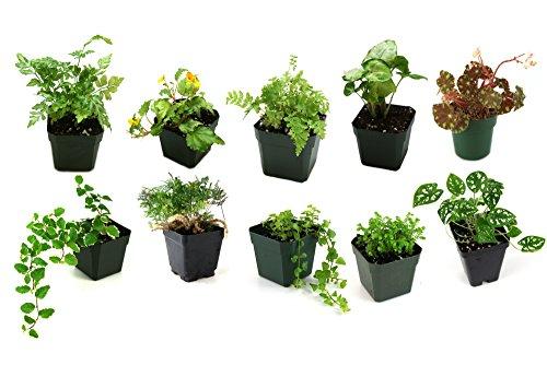 Classroom Terrarium Plant Bundle (10 plants)