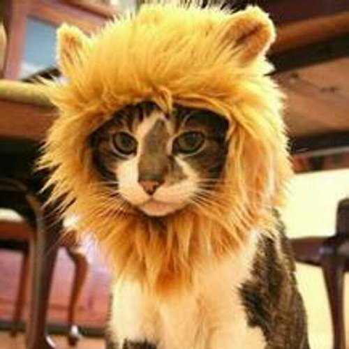 [EVINIS Pet Costume Cosplay Lion Mane Wig Cat Hairpiece With Ears For Cat Dog Decor Fake Lion Mane, Christmas Halloween Party Accessories Fancy Dress up] (Make Lion Costume For Dogs)
