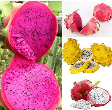 White 200 seeds 15 Types of Strawberry Seeds MIX Black Yellow,Red Giant ..