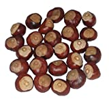 Horse Chestnuts - Quarter Size - Twenty-Five Nuts