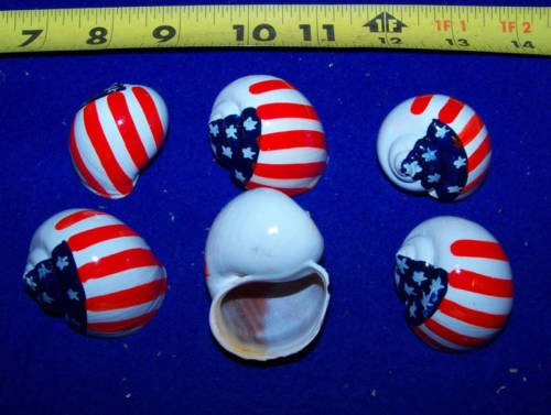 Hand Painted Hermit Crab Shells Growth Shell - AMERICAN FLAG (Limited Edition) AWagner