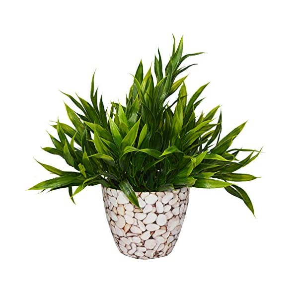 Fabric Plastic Artificial Bamboo Plant in Round Texture Pot by Fancy Mart