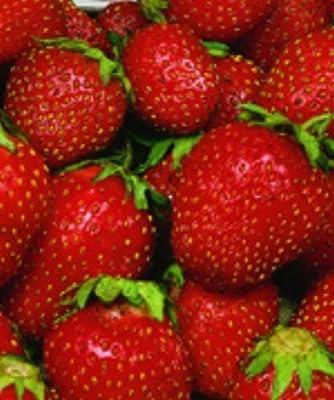 100 Sequoia Strawberry Seeds