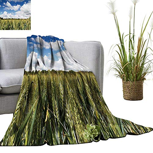 - YOYI Home Fashion Blanket Wheat Grow in a fiel in The chilterns ENGL Lightweight Blankets for Couch Bed Sofa 60