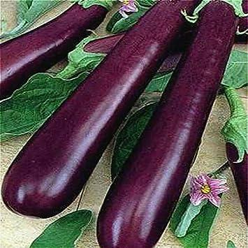 Shopmeeko 100pcs Negro Púrpura Plantas de berenjena largas Vegetales plantas Buen sabor Rico en vitaminas para