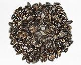 100+ : ephedra sinica Seeds - ma-haung Seeds - Medicinal - Fresh Seeds 2018