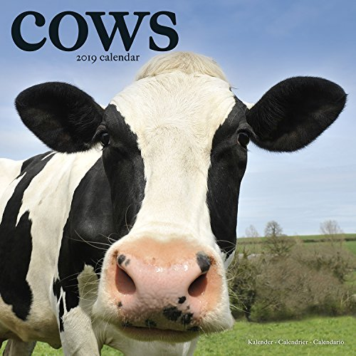 Cows Calendar - Calendars 2018 - 2019 Wall Calendars - Animal Calendar - Cows 16 Month Wall Calendar by -