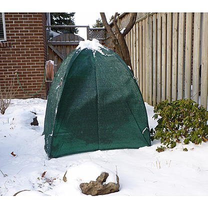 NuVue Products 20254 Winter Shrub Cover, Pop-Up 40'' x 40'' x 42'' - Green