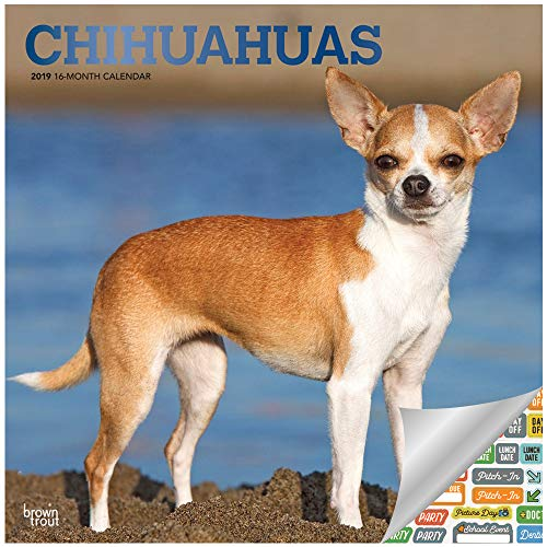 Chihuahuas Calendar 2019 Set - Deluxe 2019 Chihuahuas Wall Calendar with Over 100 Calendar Stickers (Chihuahuas Gifts, Office Supplies)