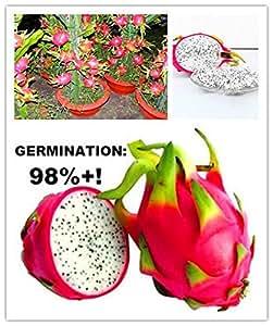 200/bolsa blanco dragón fruta Cactus non-gmo Hylocereus undatus jardín Pitaya semillas