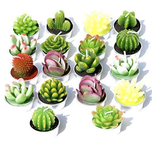 AiXiAng Delicate Succulent Cactus Candles Tealights 18 Pcs Gift Boxed for Home Decorative Home Decor Gift ()