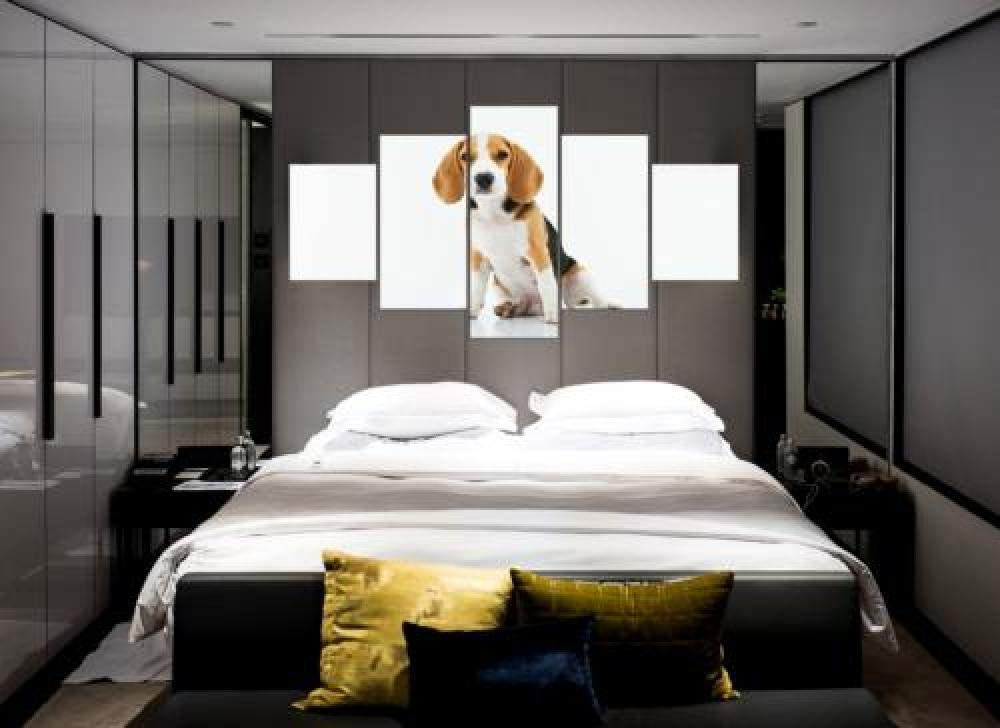 QMCVCDD 5 Piezas De Pared Fotos Cuadros En Lienzo Mascota Perro Beagle HD Imprimir Modern Artwork Decoración De Arte De Pared Living Room