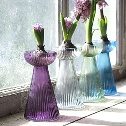Hyacinth Planting Gift Kit with Bulb and Glass Carafe Vase