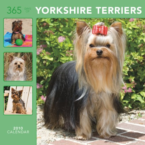 Yorkshire Terriers 365 Days 2010 Wall