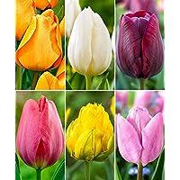 Gate Garden! Tulip Flower Bulbs (Pack of 6 Bulbs) Different Six Color/Verity by Gate Garden