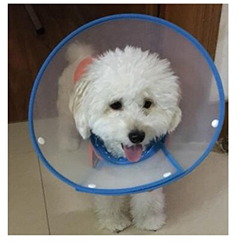 Bolbove-Pet-Plastic-Clear-Cone-Recovery-E-Collar-with-Dots-Design-Soft-Edge-for-Small-Dogs-Cats