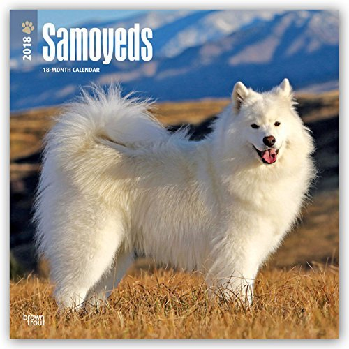 Samoyeds 2018 12 x 12 Inch Monthly Square Wall Calendar, Animals Dog Breeds (In Happy Languages Other)