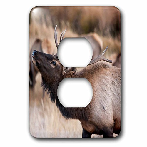 3dRose lsp_206226_6 USA, Colorado, Estes Park, Rocky Mountain NP, Bull Elk or Wapiti 2 Plug Outlet Cover