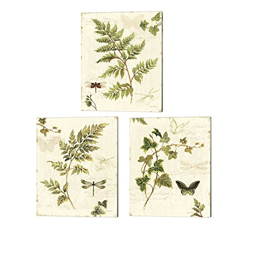 Fern Canvas Print (Ivies and Ferns by Lisa Audit, 3 Piece Canvas Art Set, 12 X 15 Inches Each, Floral Botanical Art)