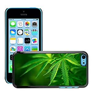 Super Stellar Slim PC Hard Case Cover Skin Armor Shell Protection // M00048564 leaf green leaves aero maco leaves // Apple iPhone 5C