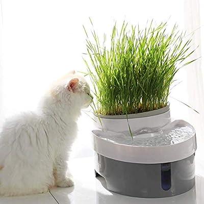 PNYGJYSJ Fuente de Agua for Mascotas - Fuente for Beber for Gatos ...