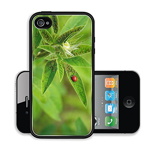 iPhone 4 4S Case 01706 Lady Bug with Aphids on Showy Tick Trefoil Image 18677082878