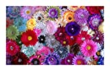 100 Wholesale Flower Clips