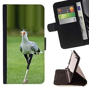Ihec-Tech / Negro Flip PU Cuero Cover Case para Apple Iphone 5C - Printemps Roadrunner Nature